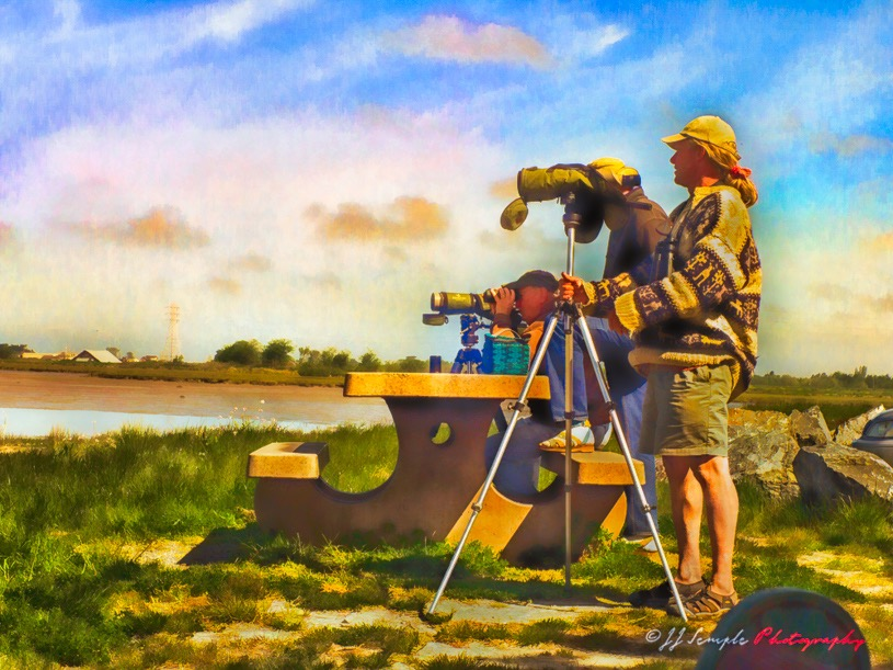 Bird Watchers, Arcata Marsh Sanctuary
